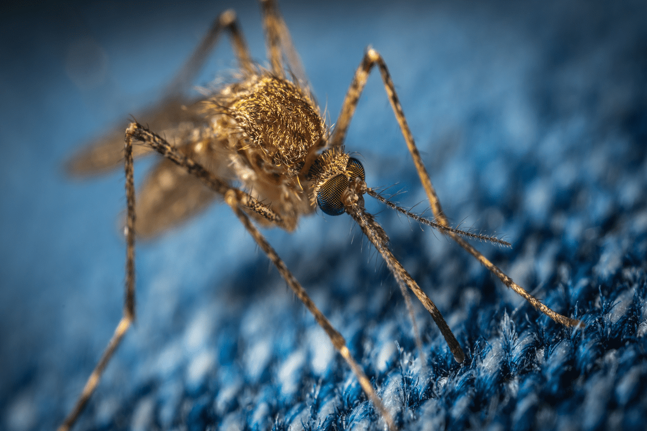 The Economic Case for Combating Malaria